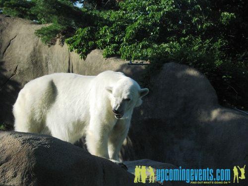 Photo from Zoobilee 2008